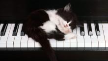 Download Cute Cat PS Vita Wallpaper