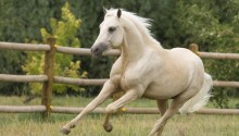 Download White horse PS Vita Wallpaper