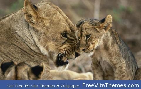 Lion cub PS Vita Wallpaper