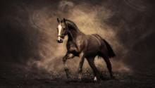 Download Brown Horse PS Vita Wallpaper