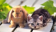 Rabbit, Kitten and Vita