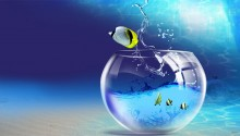 Download fish PS Vita Wallpaper