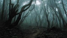Download Dark Woods PS Vita Wallpaper