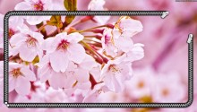 Download Cherry Blossom PS Vita Wallpaper