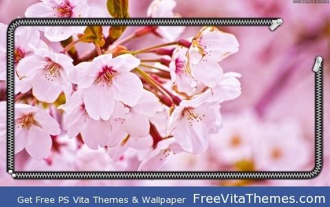 Cherry Blossom PS Vita Wallpaper