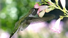 Download Hungry Humming Bird PS Vita Wallpaper