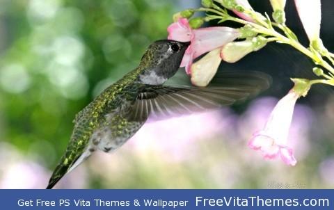 Hungry Humming Bird PS Vita Wallpaper