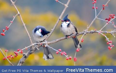 Red Whiskered Bulbul Birds PS Vita Wallpaper