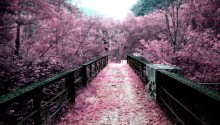 Download Japan Path Of Sakura Flowers PS Vita Wallpaper