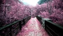 Download Japan Path Of Sakura Flowers PS Vita Wallpaper