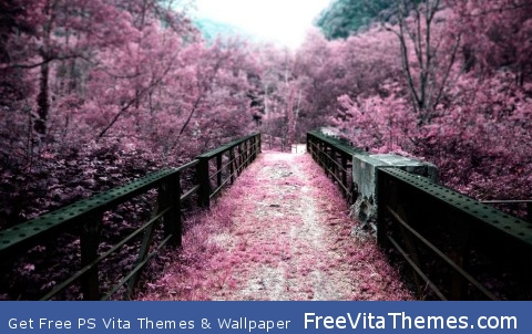 Japan Path Of Sakura Flowers PS Vita Wallpaper