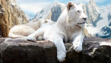 Download Snow Lion PS Vita Wallpaper
