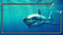Download Great White Shark Wallpaper PS Vita Wallpaper