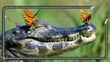 Download Crocodile Wallpaper PS Vita Wallpapers